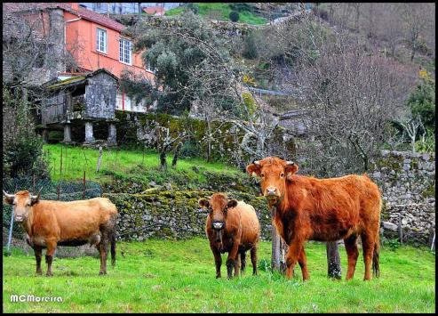 """Unións Agrarias critica las tasas abusivas de la Agencia Tributaria sobre las subvenciones por incorporación a la actividad agraria y planes de mejora de las explotaciones"""""""
