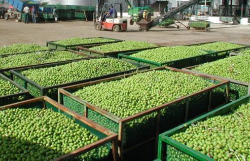 El ministerio estudia elaborar una norma de calidad para la uva con destino a vinificaciones sin denominación de origen o indicación geográfica protegida.