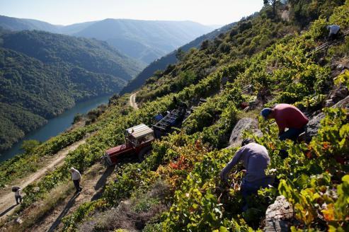 Las tierras que dan nombre a la célebre feria vinícola de Sober se distinguen por su espectacular riqueza paisajística.