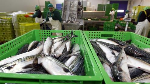 """Vendedores, armadores o transportistas realizaron un """"parón simbólico"""" esta madrugada y no descartan futuras protestas - Cifran en un 30% la caída en descargas de pesca fresca."""