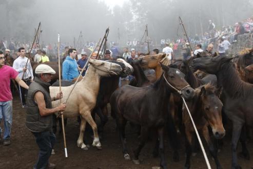 El tercer curro de la temporada sanea a medio millar de caballos salvajes de A Groba ante el doble de espectadores.