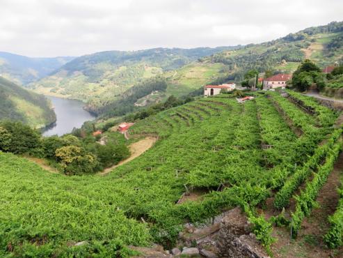 La firma asentada en O Saviñao se prepara para dar entrada a la cuarta generación de la saga familiar. Acaba de presentar los cinco primero vinos de los 16 que prevé sacar al mercado.