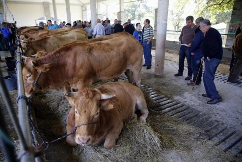 La transformación del sector ganadero gallego es una evidencia. Hay menos granjas que hace una década, pero las que continúan apuestan duro para ser cada vez más competitivas ajustándose a las nuevas normas sanitarias y medioambientales que llegan de Europa.