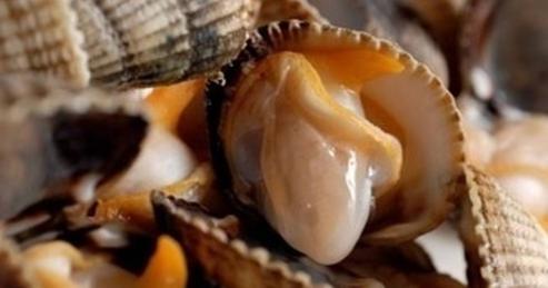 Los berberechos son apreciados por su tamaño y el intenso sabor.