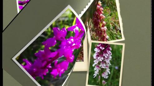 La sierra alberga 25 especies de estas plantas, el 75% de todas las que se pueden encontrar en la comunidad gallega.