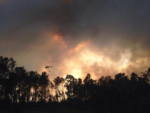 Los incendios, las plantaciones de eucalipto, la escasa materia orgánica y la falta de compostaje son los principales factores que acrecientan la erosión de la tierra.