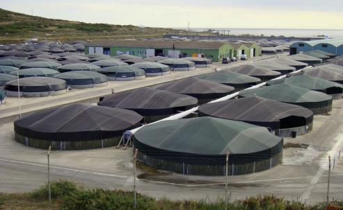 Constituye la empresa Biomarine Center, para impulsar la acuicultura