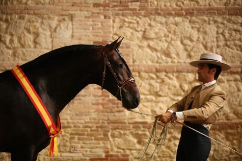Una potra de tres años adiestrada por el silledense se proclama campeona del mundo en Sevilla y otra yegua consigue una plata.