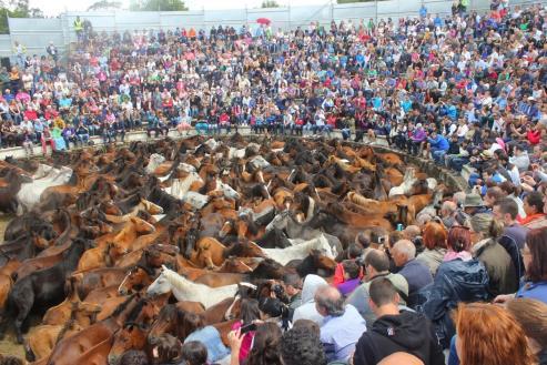 Rapa das bestas, curro de Sabucedo, fiesta de interés turistico
